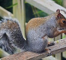 The Nut Thief . by relayer51