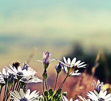 Wild Flowers by NinaJoan