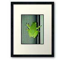 Frog on the screen Framed Print