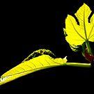 A Simple Leaf by photoj