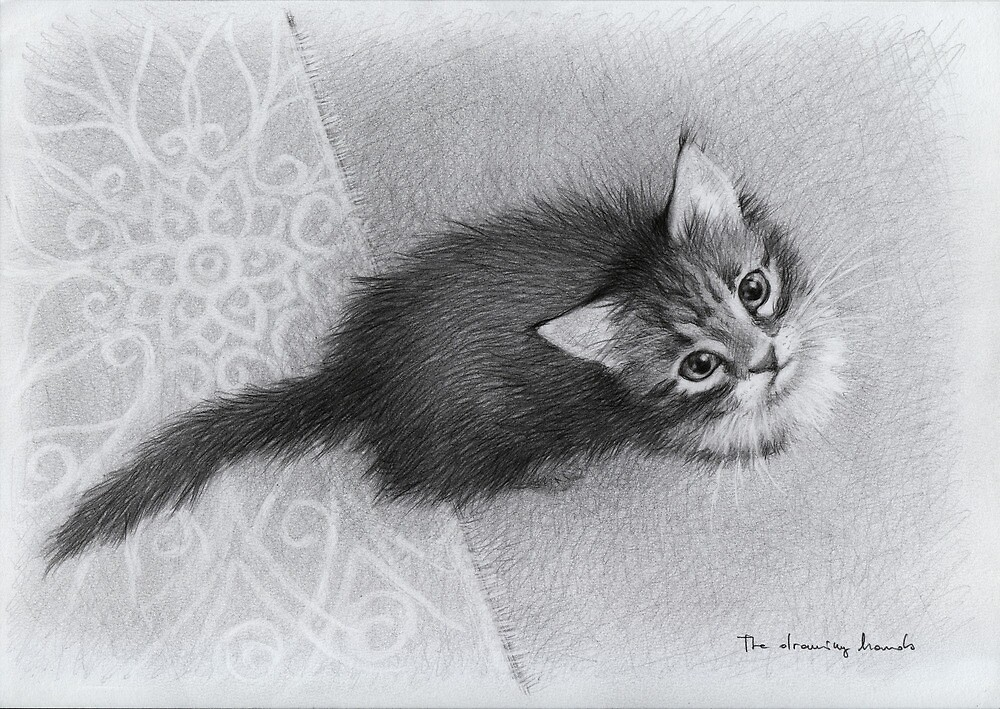Kitten by thedrawinghands