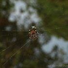Itsy Bitsy Spider by JasSanchez