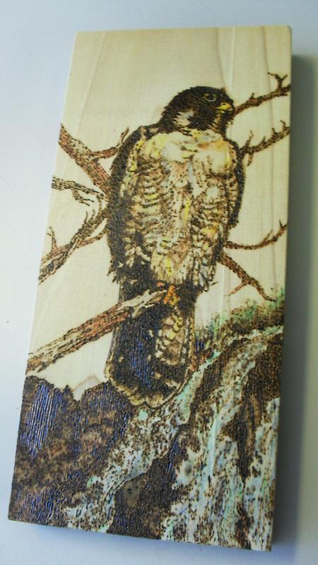hawk lookout by lynnieB