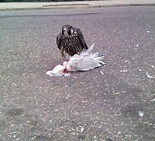 Hawk Seagull by Adasyd