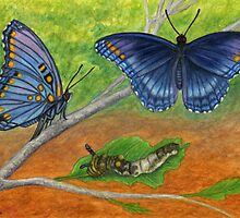 Blue Butterflies - Watercolor Pencil Drawing by M Rogers