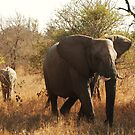 Baby elephant playing catchup by gogston