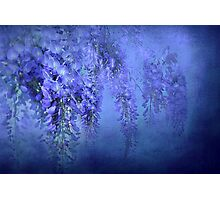 """In Love with WIsteria..."" Photographic Print"