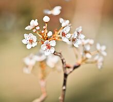 Spring Blossoms by ╰⊰✿Sue✿⊱╮ Nueckel