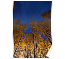 Glowing Aspens Poster