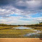 Hampton Court's lake by MarceloPaz