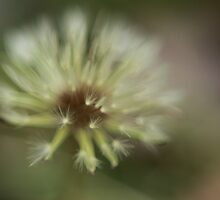 Abstract Dandelion by kristie penny