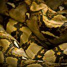 Anaconda by Steve Malcomson