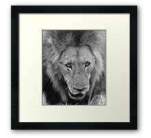 Dont come closer its our food! Framed Print