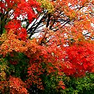 Leaves are changing © by Dawn M. Becker