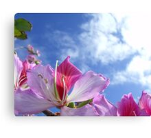 26/365 uncomplicated loveliness Canvas Print