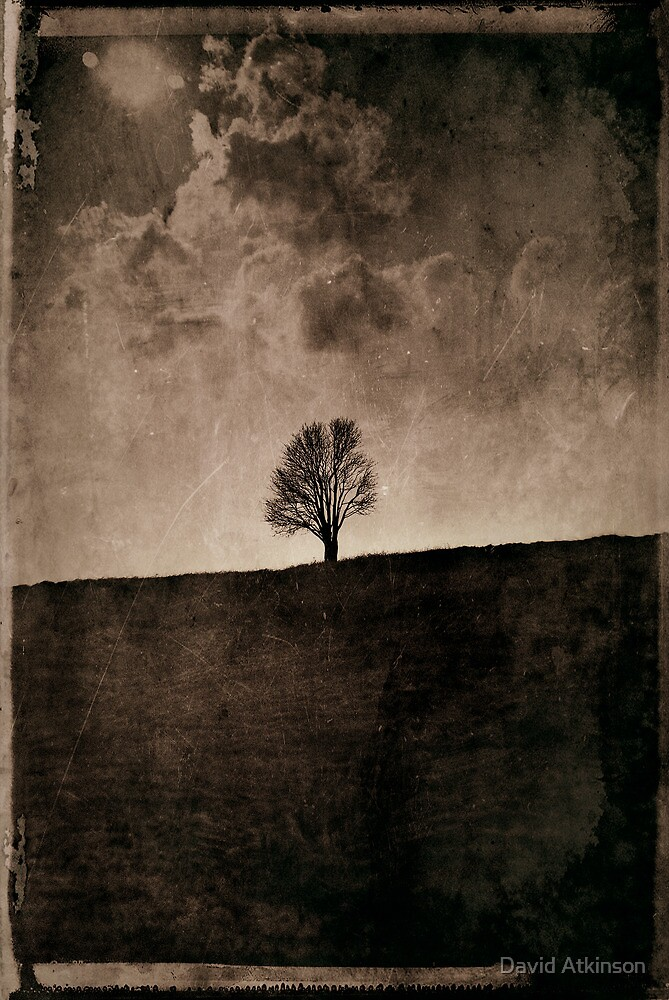The Lonely Tree by David Atkinson