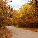 Thoroughfare into Fall by Rachel Sonnenschein