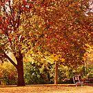 Autumn by Linda Miller Gesualdo