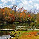 Ducks In Autumn Redone by Linda Miller Gesualdo