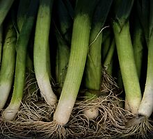 Lots Of Leeks by Odd-Jeppesen