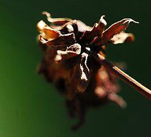 Dying Day by Zen-Art (Zenith)