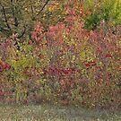Autumn Weed Grundge Style by Linda Miller Gesualdo