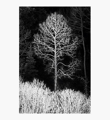 Aspen ghost Photographic Print