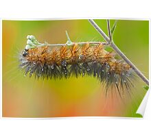 Upside down caterpillar on a rainy day Poster