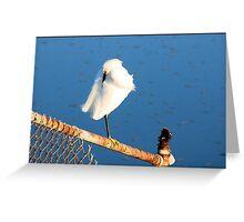 Snowy Egret Preening: Greeting Card