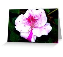 Colorful Azalea Flower Greeting Card