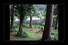Glendalough - Lake1 by Roberta Angiolani