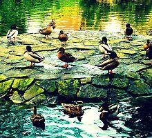 Duck Island by Chris Goodwin
