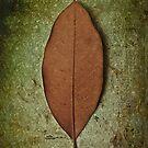 Leaf by Carlos Restrepo