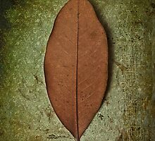 Leaf by Carlos Restrepo