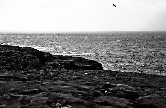 Ireland in Mono: Wind Beneath My Wings by Denise Abé