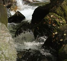 Calming stream by Melissay