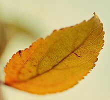fall leaf by beverlylefevre
