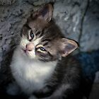 Puss by CarloAlby