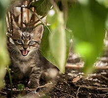Meow by CarloAlby