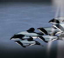 Maui Dolphins by Tiffany Muff