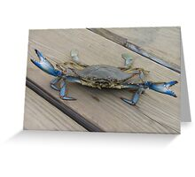 Blue crab, view 2 Greeting Card