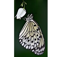 Hanging Butterfly Photographic Print