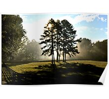 Sunbeams & 2 strong trees Poster