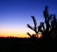 Highbridge Wisconsin Foliage in a Sunset by Adam Kuehl