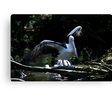 Pelican - I Can Fly Canvas Print