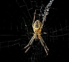 St Andrews Cross Spider by GP1746