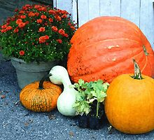 Fall Harvest by Sharon Woerner