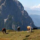 Wild Horses by Tiffany Muff