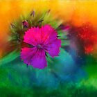 Rainbow flower,  Dedicated to Happiness by Kelly  McAleer