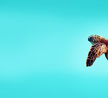 Sea Turtle by Tiffany Muff